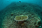 Dynamited reef not recovering after many years of damage.