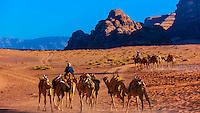 Bedouin men and their camels, Arabian Desert, Wadi Rum, Jordan.