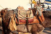 Pack Ponies saddles close up on Hydra, Greek Saronic Islands