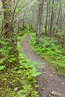 McKinley lake trail, Chugach National Forest, southcentral, Alaska.