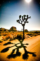 &quot;Where The Streets Have No Name&quot; - Joshua Tree NP, CA - a moon lite night<br />