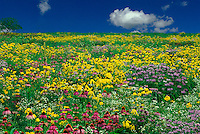 Open meadow of blooming wildflowers in a dreamscape