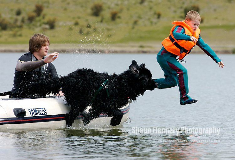 Newfoundland Dog trains with a young swimmer during a training ...