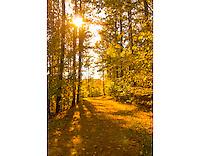The Sun Through the Woods