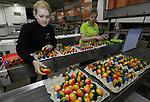 Foto: vidiPhoto<br /> <br /> BARNEVELD - Bij het eierpakstation Eicom in Barneveld worden rollen vrijdag de laatste gekleurde Paaseieren van de band om ingepakt te worden. Vanaf half maart zijn er bij het Barneveldse inpakstation dan 400.000 gekleurde eieren verwerkt. Veel eieren worden besteld door bedrijven en organisaties om aan hun klanten uit te delen of als decoratie. De gekleurde eieren van Eicom zijn bestemd voor de Nederlandse markt, met name de horecagroothandel. Boven de grote rivieren worden traditioneel alleen met Pasen geverfde eieren gegeten, in het zuiden van ons land gebeurt dat ook tijdens andere feestdagen. In Duitsland en Oostenrijk zijn gekleurde eieren het hele jaar door populair. Het inpakken van de Paaseieren is bij Eicom slechts een klein deel van de totale productie van 130 miljoen stuks. De consumptie van eieren in Nederland is ook het afgelopen jaar opnieuw gestegen en ligt nu op 200 stuks per hoofd van de bevolking. Met Pasen worden traditioneel de meeste eieren gegeten, ook omdat het aspergeseizoen van start is gegaan en asperges met eieren en ham dan een populaire maaltijd is.