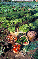 Harvest in the garden: basket of Virginia Lady tomato, onion, pepper, potato, salads, vegetable crops, leeks, farm garden mixture of vegetables