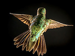 Winged Jewels