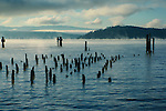 Remnant pilings of an unknown structure are silhoutted by the rising sun as the mist rises off the blue waters of Lake Coeur D Alene