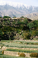 Nuristani opium field at 3000 metres in Eastern Afghanistan.