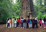 Children around Father of the Forest in Big Basin State Park