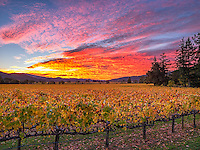 Napa Valley Sunrise
