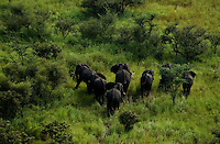 A herd of elephants in the Sudd Wetlands.  Conservationists have placed satellite collars on animals in South Sudan to unravel patterns of unknown migration routes in animals living in the Boma-Jonglei Landscape. (PHOTO: MIGUEL JUAREZ LUGO)