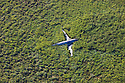 Bolivia, Beni Department, aerial view of crashed plane in savannah