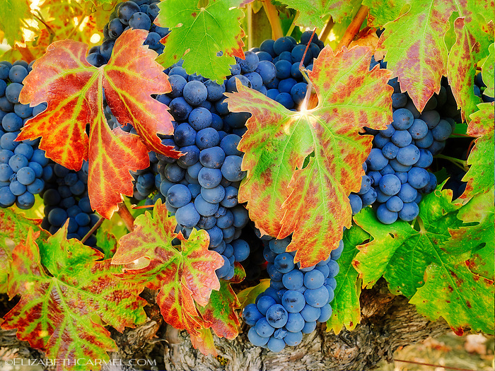 Harvest Season II