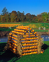 House made of pumpkins at farm in the Willamette Valley, Oregon