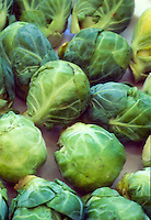 Brussel sprouts vegetables picked, little buds heads,  Brassica oleracea