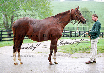 Secrettame at Mare Haven Farm, in May 2002, Kentucky.  Secrettame won the Shirley Jones, and produced Gone West, Danzatame, and Lion Cavern.