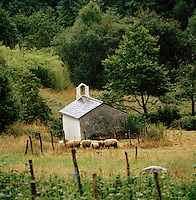 Sheep in front of a farm buidling in rural countryside near the village of Boal, Asturias, Spain