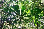Backlit Palm in Rainforest