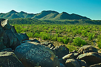 Petroglyph on Signal Hill, Hohokam Art, Saguaro cactus, Saguaro National Park, Arizona, USA