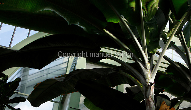 Tropical Rainforest Glasshouse (formerly Le Jardin d'Hiver or Winter Gardens), 1936, René Berger, Jardin des Plantes, Museum National d'Histoire Naturelle, Paris, France. Low angle view of a Musa Plants against the Art Deco entrance of the glasshouse.