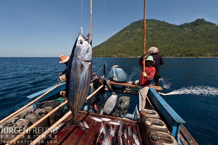Funae fishermen catching skipjack tuna near manado tua for Order live fish