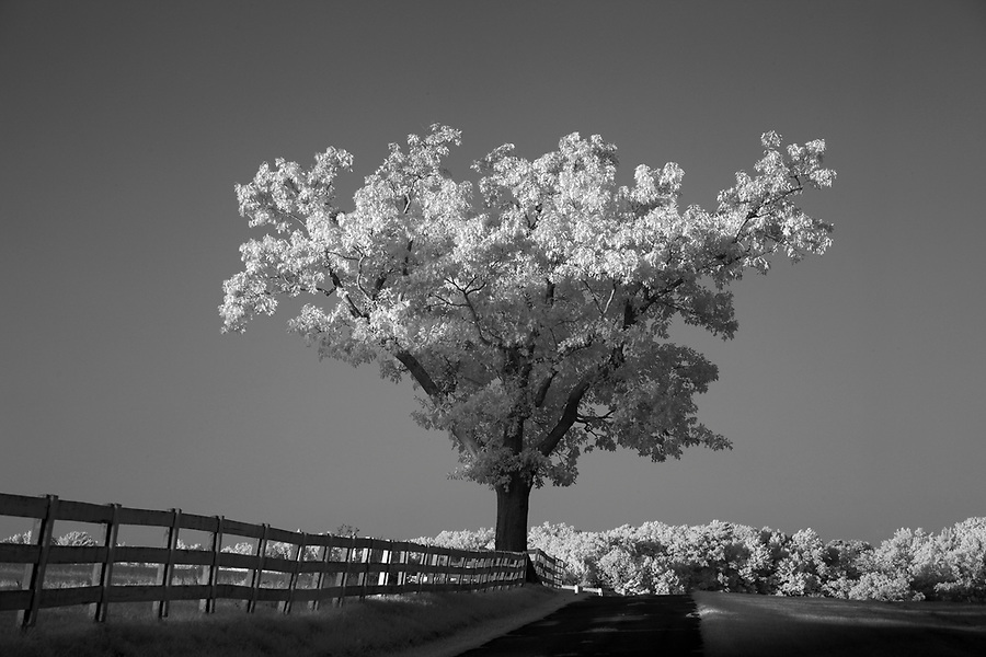 Albemarle County, Virginia photographed in infrared. Photo/Andrew Shurtleff