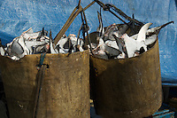 Bali Harbor Shark Fins been unloaded