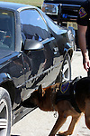 K-9 officer Bosco sniffing for drugs in a car during a drug search, Scratching indicates target found.  Germantown Police Department, Wisconsin