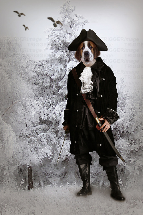 dog dressed up as captain,fantasy