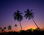 Silhouette of palm trees at sunset.