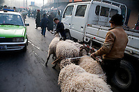 Workers herd sheep through the streets of the Old Town section of Kasghar, Xinjiang, China.