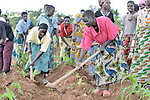 A support group for people living with HIV and AIDS in Ekwendeni, Malawi, has a communal garden where they work together. The farm is a project of the Livingstonia Synod of the Church of Central Africa Presbyterian.