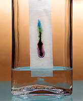 PAPER CHROMATOGRAPHY- WATER COLOR MIXTURE - 3 of 3<br />