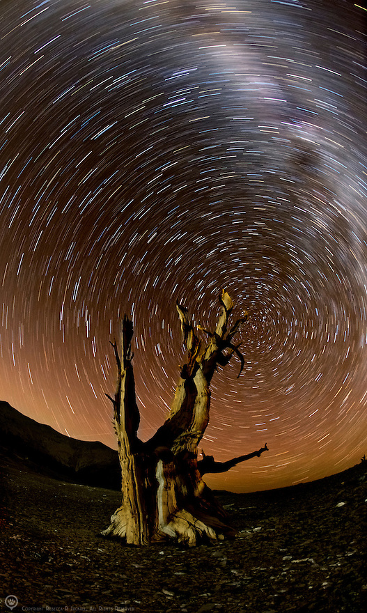 Star trails and the milky way spin around an Ancient Bristlecone Pine tree in the White Mountains, California.