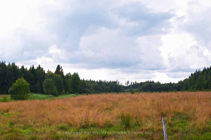 A meadow along a forest edge. Smaland region. Sweden, Europe.