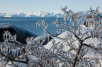 """Icicles at Lake Tahoe 2"" - This icicle covered bush was photographed in the early morning as Sand Harbor, Lake Tahoe."