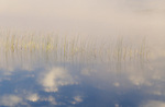 reeds and cloud reflection