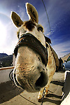 A funny picture of a donkey with a fisheye lens