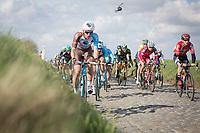 Oliver Naesen (BEL/AG2R-LaMondiale) with the peloton over the Holleweg cobbles<br /> <br /> 72nd Dwars door Vlaanderen 2017
