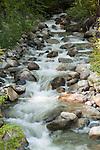 Small flowing creek near Clearwater, B.C. Canada