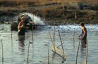 Laguna di Orbetello,  allevamento di anguille 1979.<br /> Orbetello lagoon, eel farming. 1979.