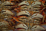 Jim Urquhart/Straylighteffect.com Crabs at the Pike Place Fish Market at the Pike Place Market in Seattle, Washington. 12/22/2009 - Jim Urquhart/Straylighteffect.com