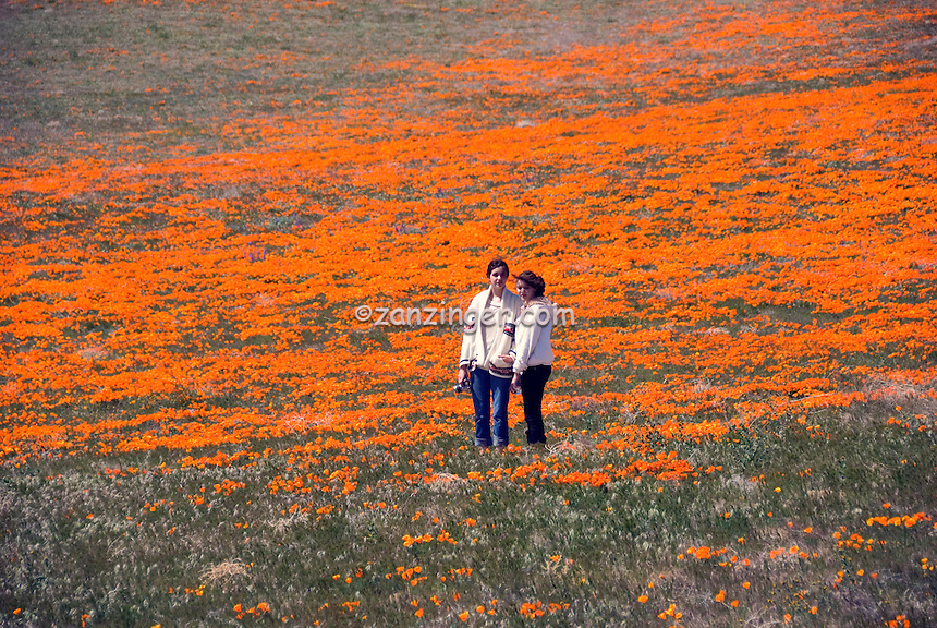California Orange Poppy Field Teenager portrait | David Zanzinger ...: zanzinger.photoshelter.com/image/I0000GBj6FU0dm9w