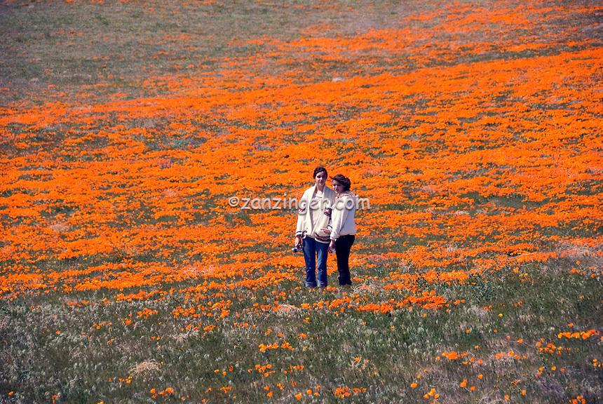 California Orange Poppy Field Teenager portrait | David Zanzinger ...: zanzinger.photoshelter.com/image/I0000GBj6FU0dm9w