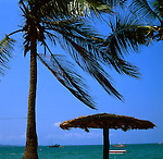 Parasol and palm tree looking over sea, Pattaya beach, Thailand.