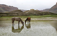 Horses and  lakes at Bandi Amir.