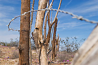 Old makeshift barbwire fence in Baja California