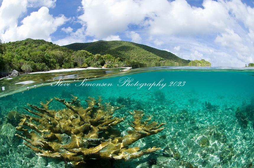 Split level view of elkhorn coral.Trunk Bay, St John.Virgin Islands National Park