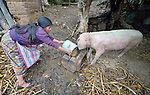 Audelina Vasquez Lopez, a Maya Mam woman, feeds a pig at her home in Tuixcajchis, a small village in Comitancillo, Guatemala.